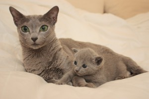 Zoe (2 veckor) med mamma Goldie